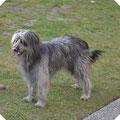 Grisette 2 Jahre alt
