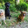 Dumpy et ses amis / Dumpling und seine Freunde