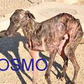 COSMO parrainé par : Josiane G. (Suisse)