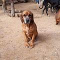 Spyro adopté par Héléna L. (81)