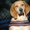 Bago adopté par Delphine DS. (77)