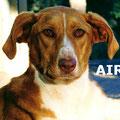 Aire parrainée par Annie B. ; Rani M.