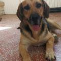 Perseo adopté par Emmanuelle B. (32)