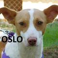 Oslo adopté par Nadia R. (44)