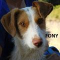 Fony adopté par Philippe P. (01)