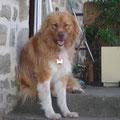 Aslan adopté par Claire R. (19)