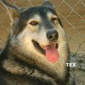 Tex parrainé par Marielle S.