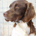Caramelo adoptée par Maud D. (42)