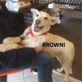 Browni parrainée par Annie B.