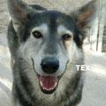 Tex parrainé par Bart J.