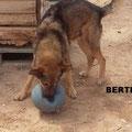 Bertillo (Cuencanimal) parrainé par Elisabeth LR.