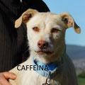 Miss Caffeina adoptée par Pascale ML. (72)