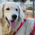 Zora adoptée par Marie-Françoise L. (14)