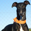 Parker adopté par Leila H. (68)