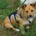Figaro adopté par Fabienne L. (09)