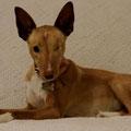 Aurélia adoptée par Lydie D. (59)