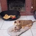 Canica adoptée par Isabelle G. (06)