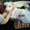 Alba parrainée parrainée par Isabelle M.