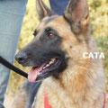 Cata adoptée par Roland S. (71)