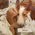 Alfonso adopté par Kevin L. (Belgique)