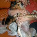 Evelyne (Déléguée 54) - Tél : 06 32 56 50 24 - evelyne@galgosfrance.info