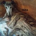 Tara parrainée par Josiane G.