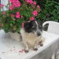 Chulin adopté par Mireille B. (36)