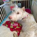 Alba parrainée par Isabelle M. ; Anita P.