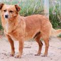 Arami adopté par Alda S. (22)