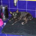 Mon petit coin douillet dans la salle de bain de l'hotel... Ma première nuit pour ma nouvelle vie!