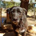 Chesca adoptée par Alice B. (Belgique)