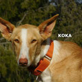 Koka adoptée par Jean-Yves C. (11)