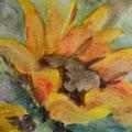 Sonnenblume, Aquarell