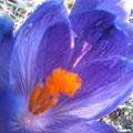 Orange in blauer Pracht