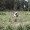 Pflanzlabyrinth im Jahr 2005