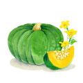 コラム「頭のよくなる野菜」挿絵 vol.12 かぼちゃ