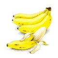 コラム「頭のよくなる食べもの」挿絵 vol.17 バナナ