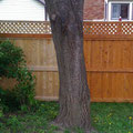 Before and after fence staining.