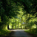 Sous-bois de la forêt de la Double