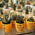 cactus, interior, interieur, fotografie, accessoires