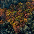 dronefotografie, drone, locatie, herfst, Rhenen, Veenendaal