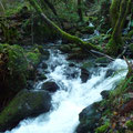 Afluente del río Eume