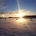 Hundeschlittentouren durch die unberührte Wildnis Lappland