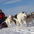 Unterwegs mit Polarhunden