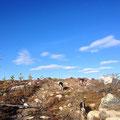 Weite Flächen zum Toben in Lappland