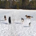 Promenad med hundarna