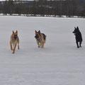 Schäferhunde im Einsatz