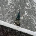 Ausharren im Schnee zwei Tage lang