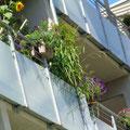 Üppigkeit am Balkon