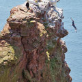 Helgoland mit seinen typisch roten Felsen